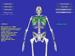 Esqueleto 3D Soft. Medicina Esqueleto+%C2%B73D