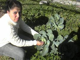 COSECHA DE COL organica en nuestro invernadero