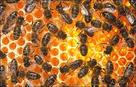 Картинки по запросу танец пчел