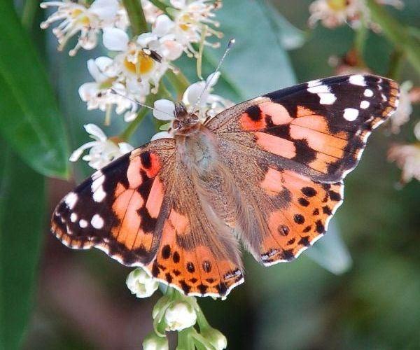 Citaten Toekomst Keren : Spirituele vrienden vlinders van god