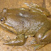 Νέα ήδη ζώων κινδυνεύουν να αφανιστούν σύμφωνα με τη WWF