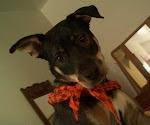 Trail Doggie #1