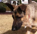 Trail Doggie #2