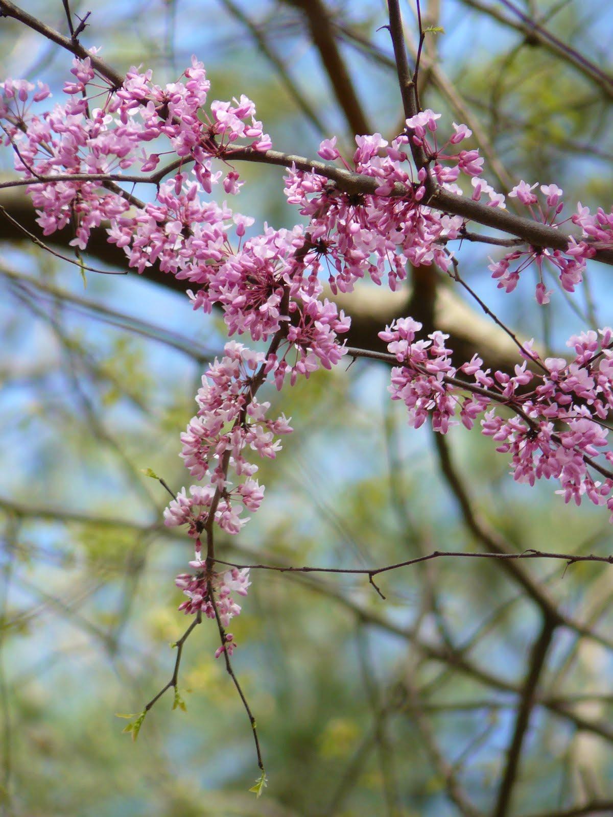 träd som blommar på bar kvist