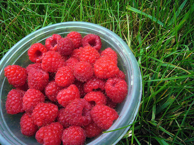 frsh picked raspberries