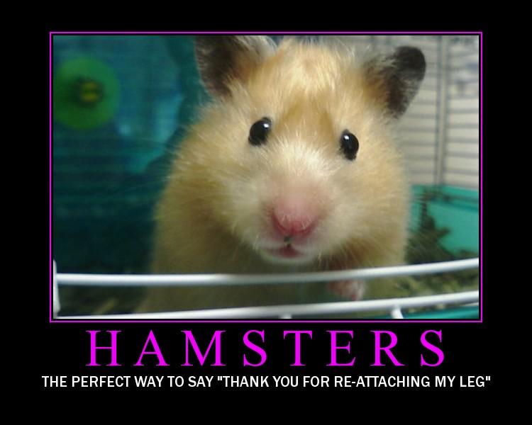[Bellona+-+Hamsters.jpg]