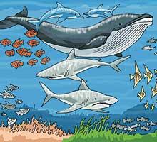 el ambiente acuático