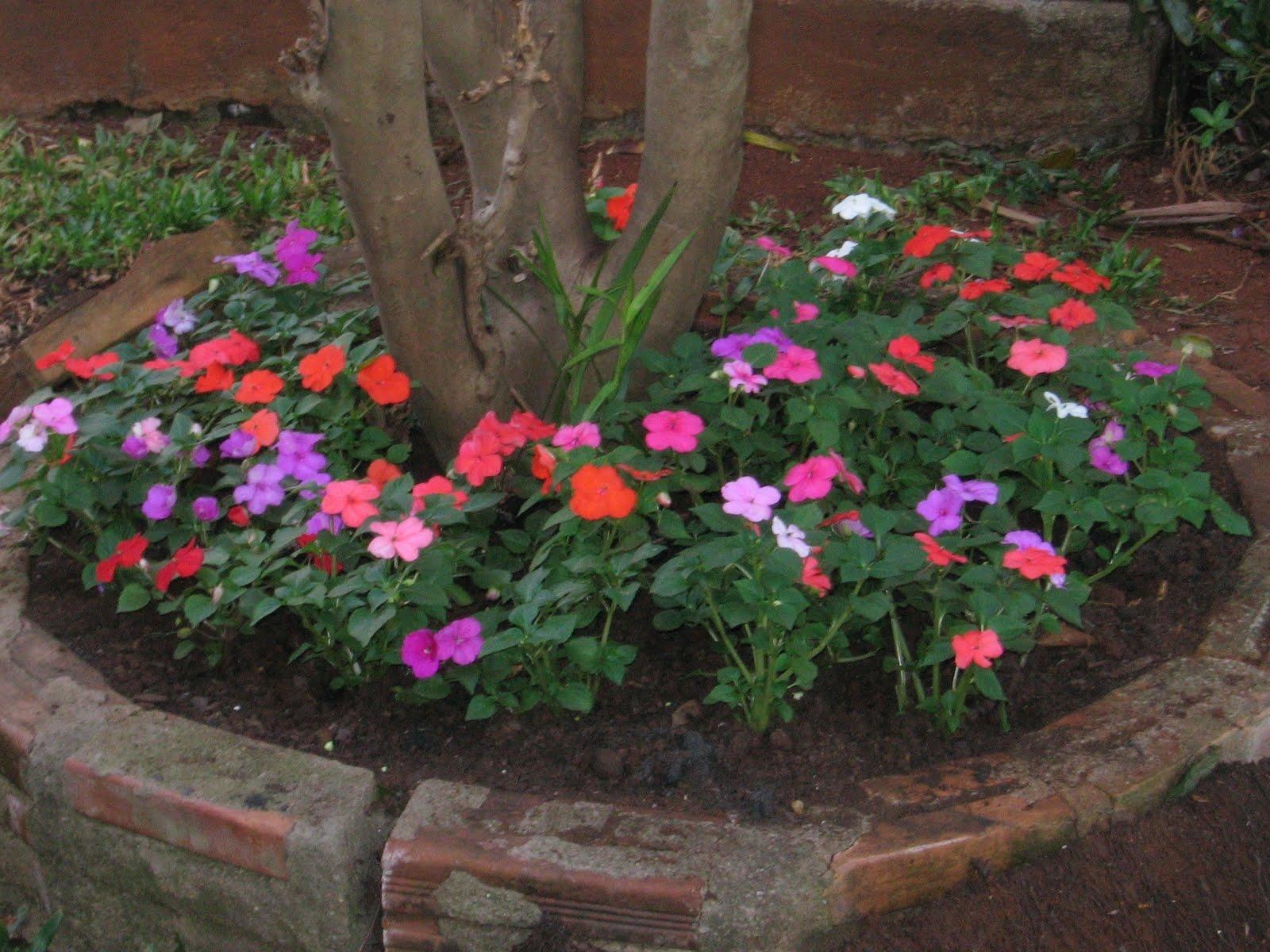 plantas bordaduras jardimMariasemvergonha é ótima opção para