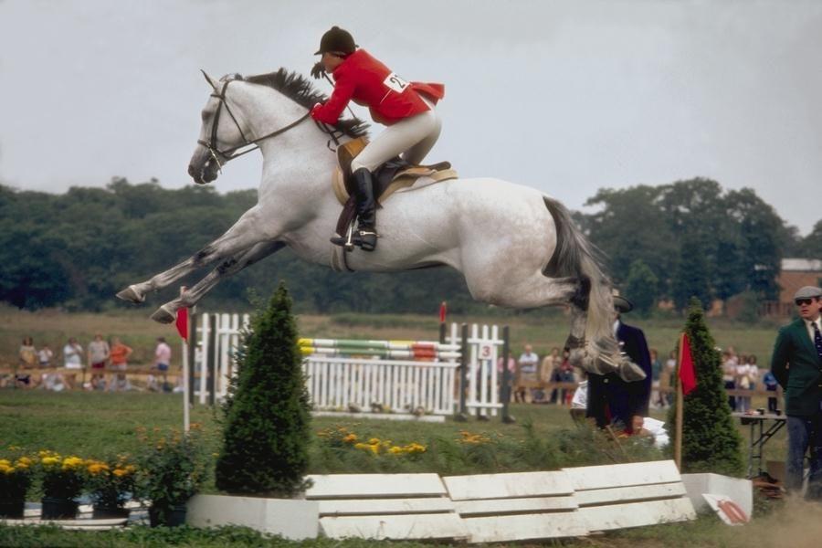 appaloosa horse jumping