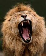 Singa - Lion