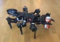 Video Robot Semut