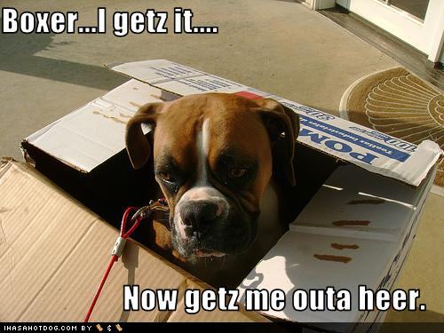 funny-dog-pictures-your-boxer-is-tired-of-your-bad-jokes.jpg