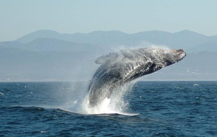 [Whale]
