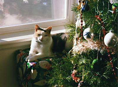 Holiday Trixi