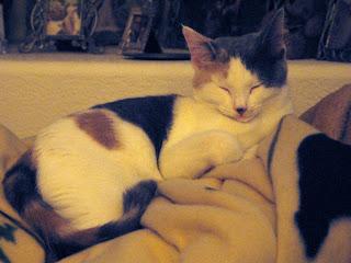 Gretel Sleeping