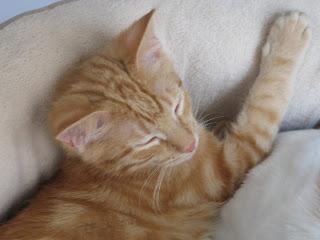 Hansel Sleeping Photo 4