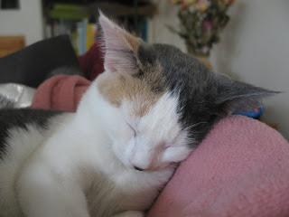 Gretel Sleeping Photo 3