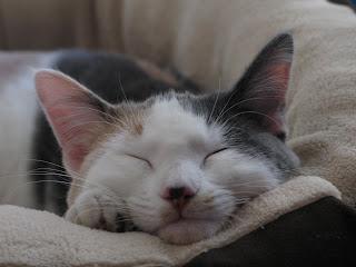 Gretel Sleeping Photo 5