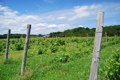 Snow Farm Vineyard in Vermont