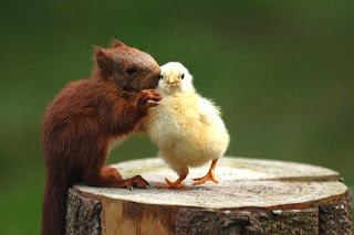 mouse and chick, funny animals