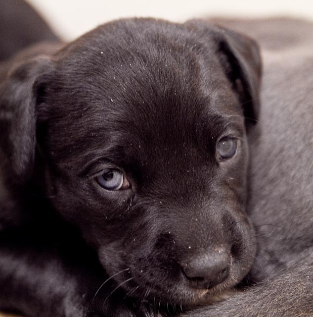 animal+shelter+ +Feb+26 35 Puppies, Puppies and More Puppies