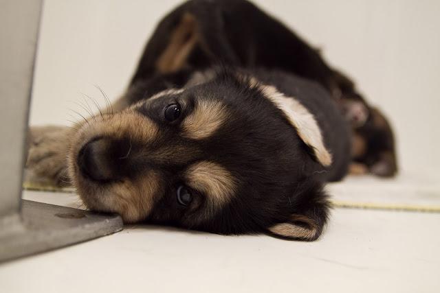 Puppy I Escaped