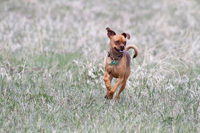Lola 5 >Full Speed Ahead   ADOPTED