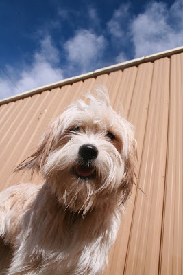 Dogs and Blue Skies