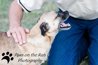 IMG 5073 Pug Happiness