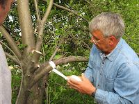 Cambium Layer Grafting http://kiwicranappleblend.blogspot.com/2009/05/grafting-apple-tree.html
