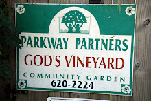 God's Vineyard Community Garden