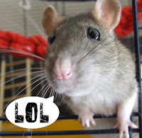 Rat pic shamelessly stolen from ScarySister, much like she stole my priceless collection of early Viz Comics, not that I'm bitter or anything