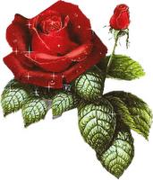 Mimo de Rosa María