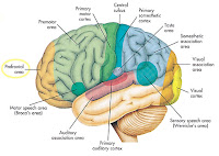 """""""Brain Food"""" untuk meningkatkan daya Ingat"""