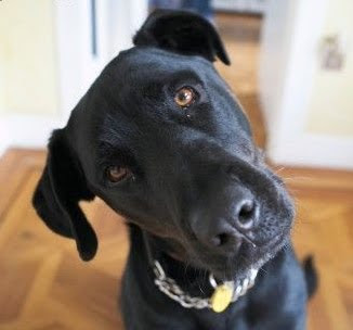 Confused_dog.jpg