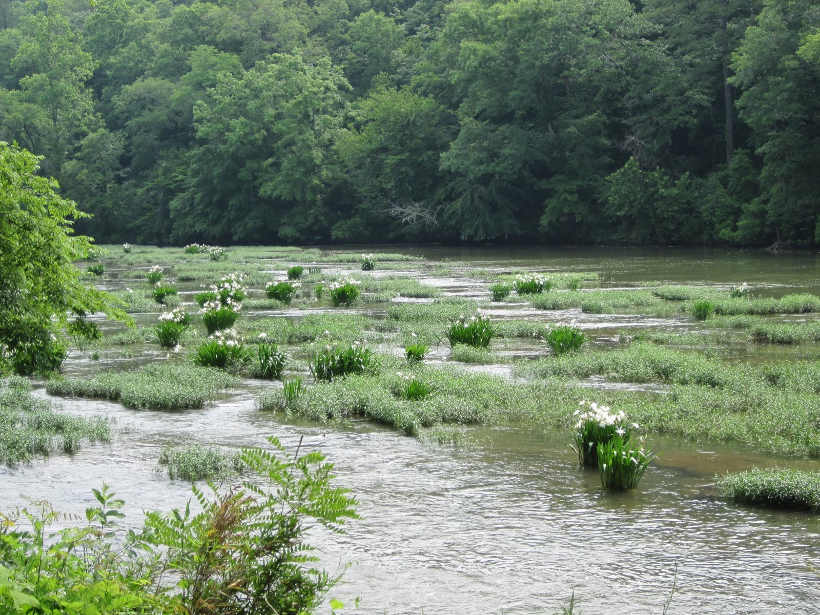 Where could i find a good article explaining cahaba river pollution?