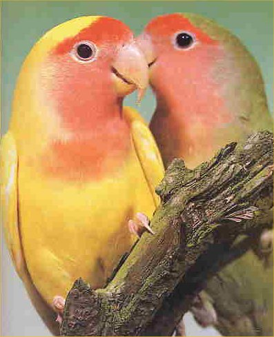 [lovebirds.jpg]