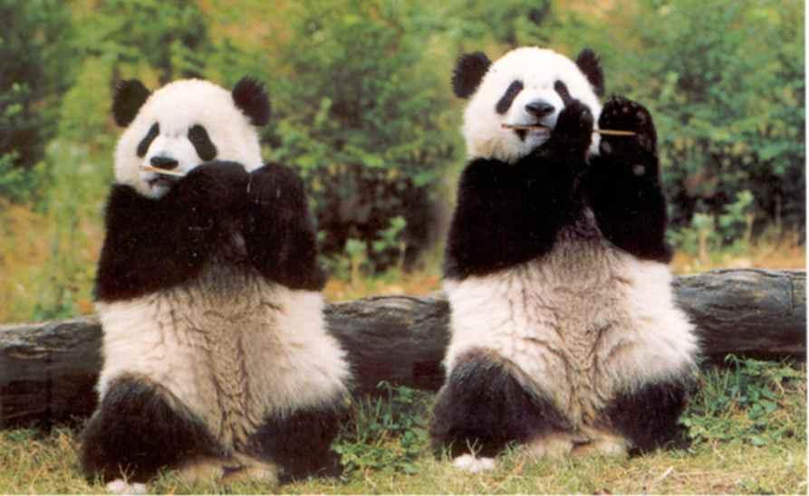 http://3.bp.blogspot.com/_FNQgkfCwYxs/S82insARmeI/AAAAAAAAAnc/q_2tf0rQSoQ/s1600/panda.jpg