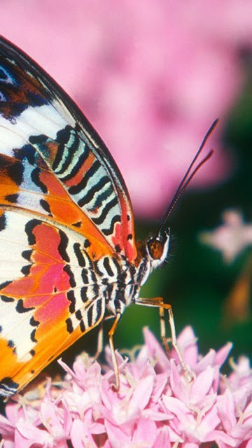 Nokia 5800 Xpressmusic Wallpapers Beautiful Butterfly Wallpapers