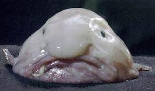 [Bild: Blobfish.jpg]