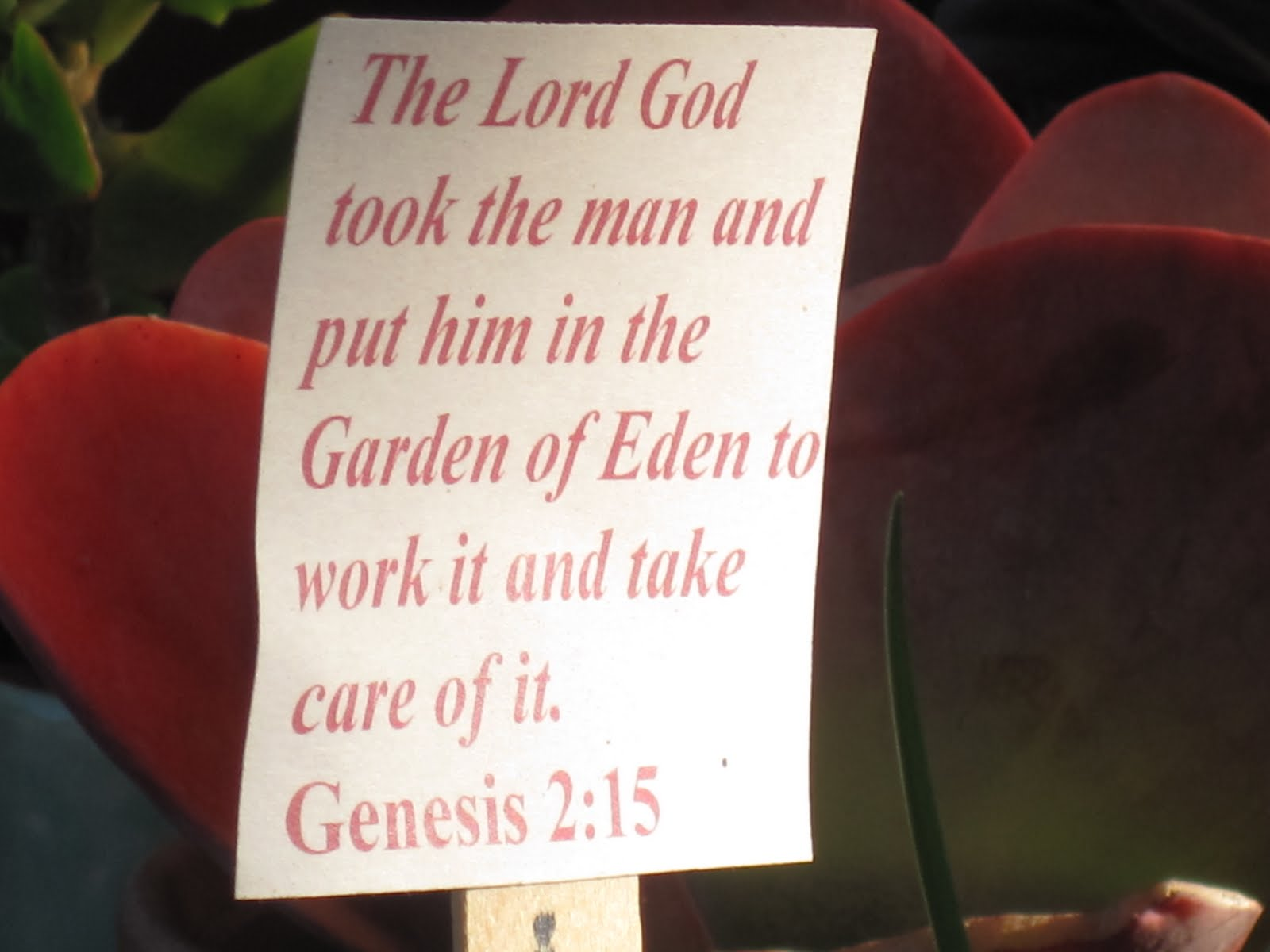 Eyes on christ garden related bible verses garden related bible verses izmirmasajfo Gallery
