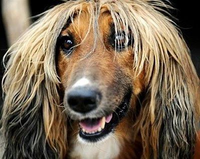 Pets: Afghan hound.