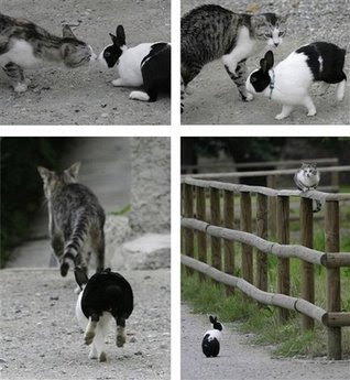 Animals and Pets: cat and rabbit.