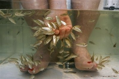 Aninals: Fish pedicures.