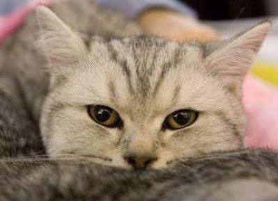Animal: cat.