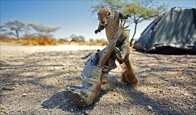 Animals: squirrels.
