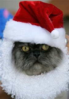 Pet: cat Santa Claus.
