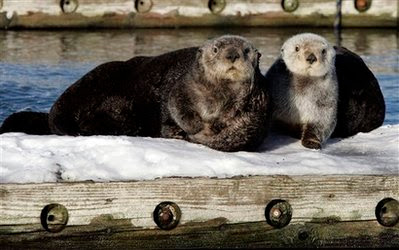 Animals: a couple of sea otters.