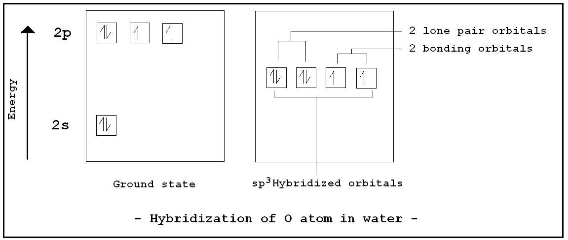 scl2 hybridization Gallery