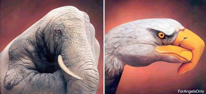 45 Mind Blowing Optical Illusions Forangelsonly